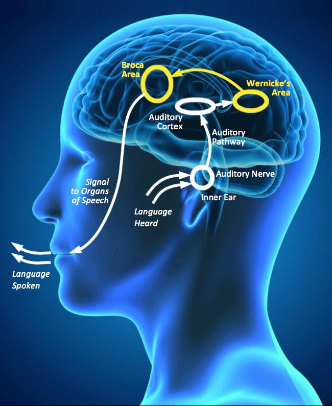 Language Processing Disorder: Symptoms (2/3)